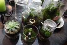 little gardening / by aquapiyo