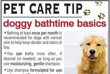 Dog Care Tips / Bow Wow Beauty Shoppe  Visit us at: http://www.bowwowbeautyshoppe.com  4219 Park Blvd., San Diego, CA 92103