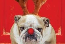 Christmas Outfits for Dogs / Festive Outfits for dogs