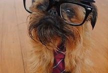 Hipster Dogs / Beards and Glasses it's hipster all the way for these dogs