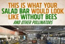 All Things Bees / by GMO Inside
