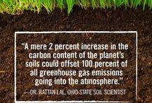 GMO Free Gardens / Keeping your garden GMO free. / by GMO Inside
