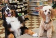 Healthy Pets / Keep you fluffy, feathered and furry friends healthy with these tips!