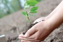 Friends of the earth / Tips for living sustainably