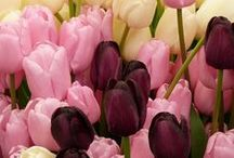 Flowers & Plants / Fiori, piante, giardini, prati. / Flowers, plants, gardens and lawns / Flores, plantas, jardines y céspedes.