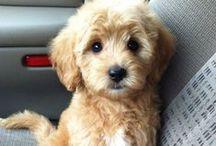 Puppy corner