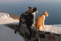 Micio Micio / Nel mondo dei gatti.... a passo felpato.