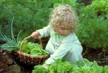 Garden n Herb tips / Amazing board of everything you need for just about everything from gardens, herbs, or fairy gardens!!! / by Vickie Lynn
