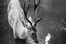 Deerest Love / My three favorite animals: deer, goats, and sheep