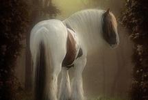 Ω Horses Ω / by H Stanbery