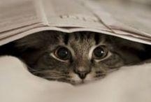 LOVE Kitty.. / awwwwwww........Adorable!!!!!!!!!!!!LOVE!!!!!!!!!