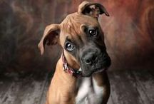 Best of Dogs / pets dogs animals