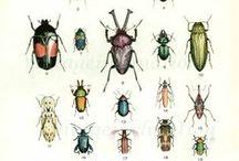 Hmyzie