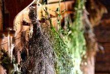 Herbs & Plants as Ingredients