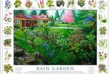 Rain Gardens, Cisterns, Swales and More... / Plants and Design