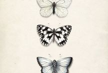 about butterflies and other insects.