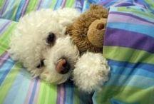 Doggies!!! / by Melinda Rosborough