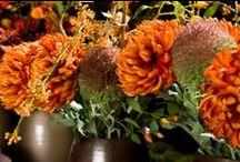 Autumn / Things we love about Autumn. Enjoy this season!