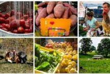 About Elmwood Farmers and the Farm