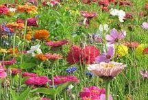 Lovely Lovely Gardens