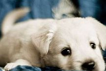 Dogs & cats / Our fur babies - dogs & cats