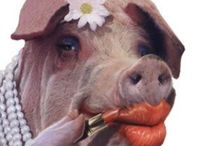 I SMELL BACON / PIGS & HOGS / by J.M. JOHNS