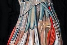 anatomia y mas