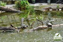 Bau Schildkrötenhaus / CHELONIA ist ein Projekt der Auffangstation für Reptilien München e. V. Zwei ehemalige Gewächshäuser in München-Freimann verwandeln sich nach und nach in ein Schildkrötenparadies...