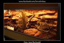 Terrarienbau Leopardgeckos / Auf der Suche nach Ideen für die Einrichtung und Gestaltung eines Terrariums für Leopardgeckos (Eublepharis macularius)? Dann bist Du auf dieser Reptilienland Pinnwand richtig! Dies ist das Terrarium von Jana Buchwald. Danke für die Bilder! Lasst Euch inspirieren, speichert für Euch relevante Inhalte und schickt uns über Facebook eigene Bilder...