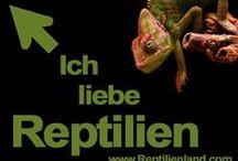 Outing - Ich liebe Reptilien / Terraristikfans - outet euch!