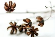 Seeds&poods