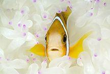 ÁLLATOK - Víz alatti csoda világ