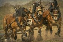 """HORSE POWER (PLOW-HEAVY WORK) / HORSES WORKING THE HEAVY JOBS FROM DAWN TILL DUSK. THEY REFER TO HORSES PULLING WAGONS AS """"THOSE LUCKY BASTARDS"""". / by J.M. JOHNS"""