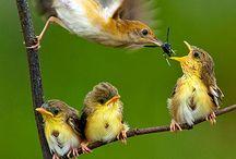 madarak bird