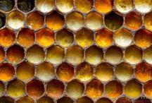 méhek méhészkedes