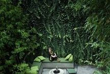 Olga's garden