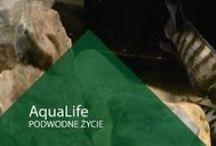 Aqua Life - PODWODNE ŻYCIE / Ryby, rośliny, krewetki, ślimaki... itp.