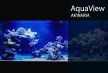 Aqua VIEW - AKWARIA / Pokazujemy piękne zbiorniki.