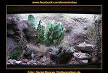 Terrarienbau Wüstenterrarium / Sognora Wüstenbecken für Kettennattern - von Daniel Renner - vielen Dank für die Bilder.  Das Becken misst 120 x 65 x 65 cm. Bewohner: 1.1 Lampropeltis californiae - Kalifornische Kettennattern. Die Beleuchtung besteht aus 2x 16W T4 und 1x 39W T5  Lass Dich inspirieren und speichere Dir relevante Inhalte. Oder schicke uns Deine Fotos über Facebook und inspiriere andere...
