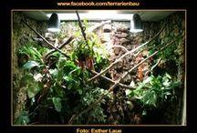 Bau Regenwaldterrarium / Regenwaldterrarium mit Wasserfall von Esther Laue - lieben Dank für Bilder und Anleitung!. Alu-Stecksystem mit den Maßen 180 x 70 x 215 cm (B x T x H).   Beleuchtung:  2 x Bright Sun 70 W im Terrarium von 10:00 - 16:00 Uhr 1 x 150 W HQI auf Gaze von 8:00 - 18:00 Uhr 2 x T5 Biovital 54W auf Gaze von 7:00 bis 19:00 Uhr  Inneneinrichtung: 100 kg Erde mehr als 20 verschiedene Pflanzen, Äste und Wurzeln Bauzeit: ca. 2-3 Monate Bewohner: 1,1 Gonocephalus bellii (Blaukehl Winkelkopfagame)