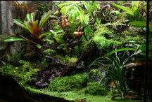 Inspiration Regenwaldterrarien / Für alle Terraristik Fans: auf dieser Pinnwand findet Ihr jede Menge Inspiration zur Einrichtung und Gestaltung tropischer Terrarien. Ihr plant ein Regenwaldterrarium? Dann speichert Euch Ideen, die euch gefallen auf eurer Pinnwand...