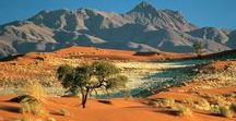Lebensraum Wüste
