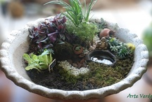 Terrariums / by Arte Verde