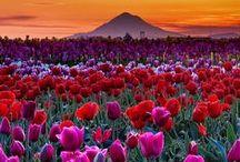 Flowers ~ Gardens / Fields  / by GalleryA-II