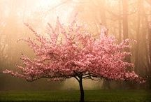 prunus / by Mrs Right