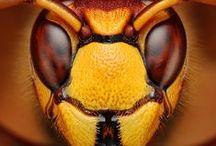 kids bugs / by Angela Needham