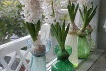 Hyacinten - Hyacinths