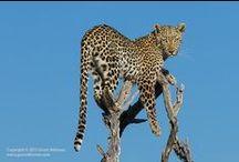 Pattedyr / selv om den ser rar ut er den helt lik en valp eller at annet søtt dyr du bare vil ta opp å kose med i timesvis!