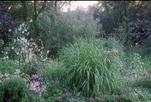 @_Garten: Stauden/Pflanzen/Gräser / .