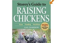Chickens & Ducks / Information about raising and caring for chickens and ducks.